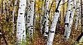 Autumn Calgary Alberta. (8168797086).jpg