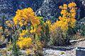 Autumn colours in SW Utah - spectacular colours along Huntington Creek on Hwy 31, Utah (15467317049).jpg