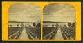 Avenue leading to Lake, from Robert N. Dennis collection of stereoscopic views.png