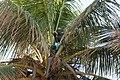 Bahia 2011 (7295901304).jpg