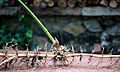 Bamboo Rhizome 02.jpg