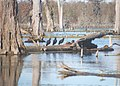Bayou vultures 9-12-25.jpg