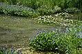 Beautiful purple flowers by the lakeside (35777103294).jpg