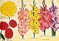 Beckert's '48 garden annual (1948) (20332943836).jpg