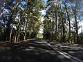 Benandarah NSW 2536, Australia - panoramio (26).jpg