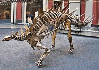 <i>Kentrosaurus</i> genus of reptiles (fossil)