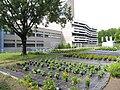 Beuth-Hochschule für Technik Berlin 2011-06-24 Haus Grashof und Garten.JPG