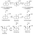 Biosíntesis de necinas 2.png
