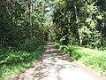 Birštono sen., Lithuania - panoramio (33).jpg