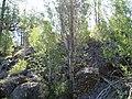 Birch Tree Grove and Cliff-Malheur (29672159836).jpg