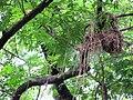 Bird's Nest 02.JPG