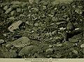 Bird lore (1916) (14752284341).jpg