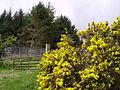 Black Essett Plantation - geograph.org.uk - 170860.jpg