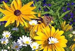 Blume mit Schmetterling und Biene 1uf.JPG