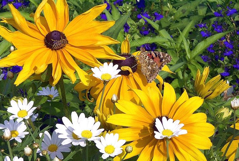 File:Blume mit Schmetterling und Biene 1uf.JPG