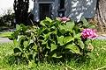 Blumen vor der Diakoniekirche Aprath 20160710 7.jpg