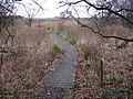 Boardwalk over swampy ground - geograph.org.uk - 1103093.jpg