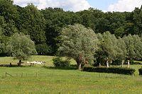 Bocage Avesnois.jpg
