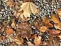 Boden im Herbst - panoramio.jpg