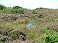 Boggy area on Waldridge Fell.jpg