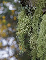 Bokeh Wednesday - with lichen (2924541332).jpg