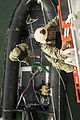 Bold Alligator 2014 141104-N-JY188-087.jpg