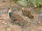 Картина двух пестрых коричневых птиц с многочисленными зелеными пятнами на крыльях и хвосте, идущих по земле