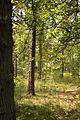 Bos (Landgoed Ginkelduin, Leersum).JPG