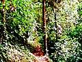 Bosque, en la Finca Hidroelectrica ASA. - panoramio.jpg