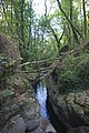 Bosque - Bertamirans - Rio Sar - 042.jpg