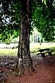 Botanic garden limbe122.jpg