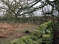 Boundary Wall - geograph.org.uk - 373959.jpg