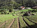 Brasil Rural - panoramio (57).jpg