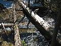Bridalveil Creek bridging log - panoramio.jpg