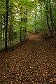 Bridleway, Coneygree Wood - geograph.org.uk - 1023341.jpg