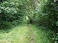 Bridleway, Pits Wood - geograph.org.uk - 887906.jpg