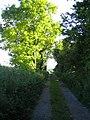 Bridleway east of Teffont Down 2 - geograph.org.uk - 882145.jpg