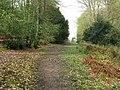 Bridleway north of Bedham - geograph.org.uk - 1258356.jpg