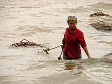 Bringing in a Seafood Catch - Kep - Cambodia.JPG