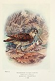 Britain's birds and their nests (1910) (14732346116).jpg