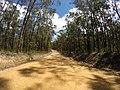 Brooman NSW 2538, Australia - panoramio (126).jpg