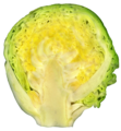 Brussel sprout.png