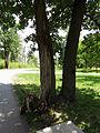 Bucha park19.JPG