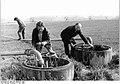 Bundesarchiv Bild 183-1988-0517-024, Sülstorf, Anstellen der Beregnungsanlage.jpg