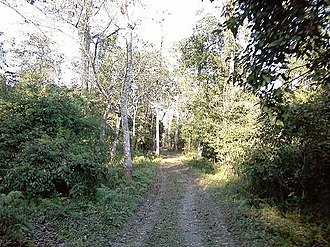 Bura Chapori Wildlife Sanctuary - Image: Bura Chapori Wildlife Sanctuary in Assam