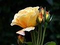 Burma Star. (13814983355).jpg