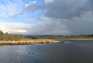 The eastern half of Burnaby Lake on a cloudy d...