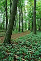 Bushey Wood, near Southorpe - geograph.org.uk - 602035.jpg