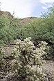 Butcher Jones Trail to Pinter's Point Loop, Tonto National Park, Saguaro Lake, Ft. McDowell, AZ - panoramio (82).jpg
