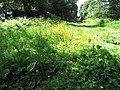 Buttercups and Bracken - geograph.org.uk - 2439114.jpg
